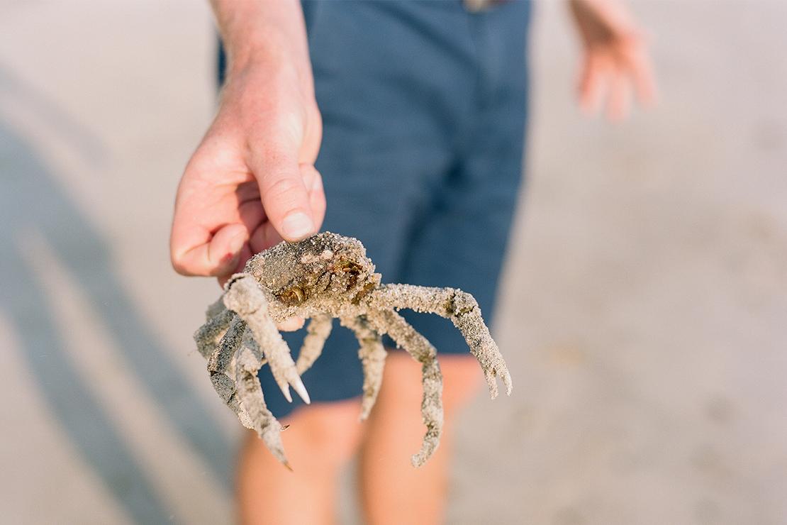 03_spider_crab