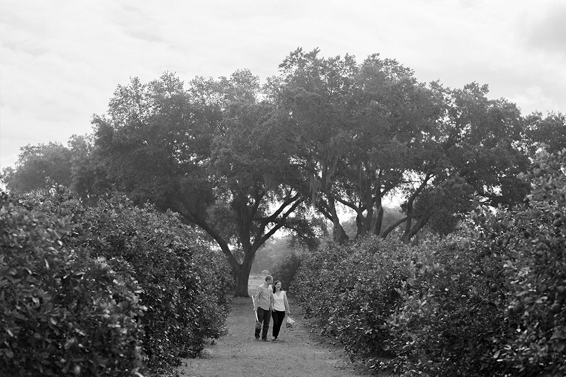 07_orlando_florida_wedding_photographer_engagement_session_orange_picking