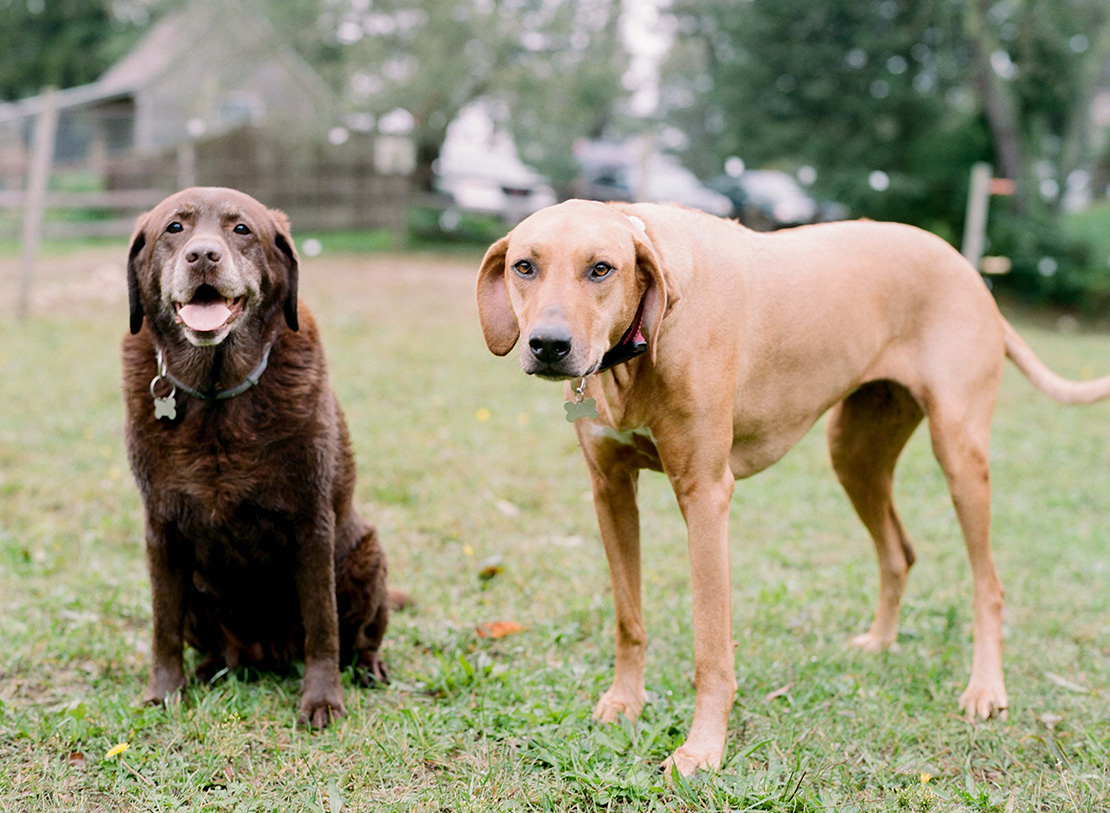 09_family_portrait_session_dogs_pets_lifestyle_cape_cod_photography